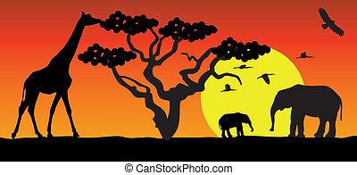 giraff, afrika, elefanter
