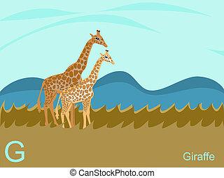 giraff, alfabet, g, djur