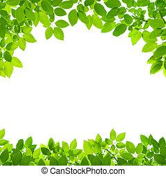 gräns, bladen, gröna vita, bakgrund