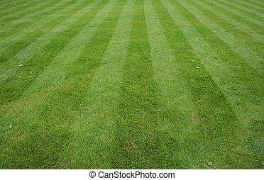 gräsmatta, snitt, stripes