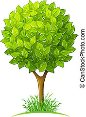 grönt lämnar, träd