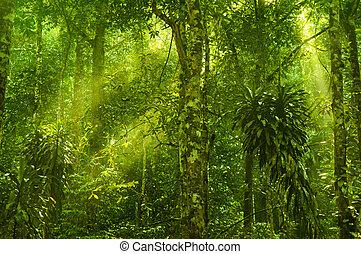 grönt skog