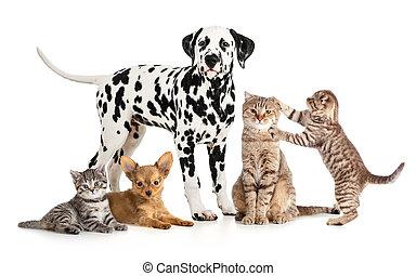 grupp, collage, veterinär, isolerat, petshop, älsklingsdjur, djuren, eller