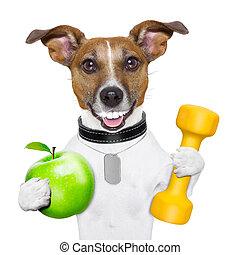 hälsosam, hund, fitness