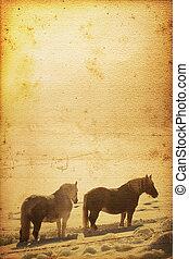 häst, bakgrund
