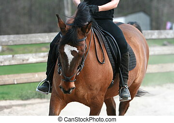 häst, exercerande, vik