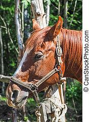 häst, röd, stående