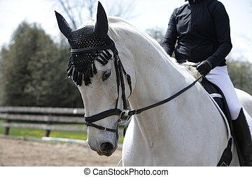häst, skolundervisning, dressyr