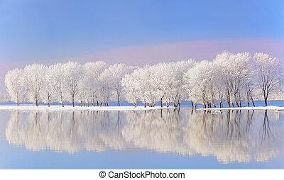 höjande, frost, övervintra trees