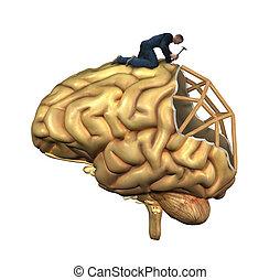 hjärna, rekonstruktion
