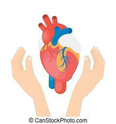 hjärta, hands.