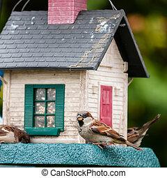 hus, fåglar, träd, fågel, feeders.