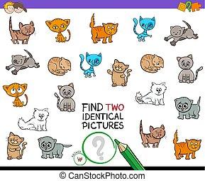 identisk, lurar, bilder, två, lek, kattunge, finna