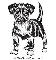 illustration, hund, objekt, färg, setter, isolerat, vektor, bakgrund, svart, stylized, vit