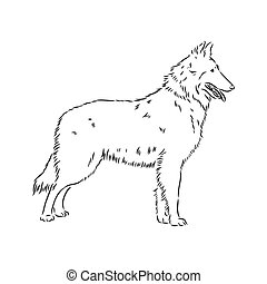illustration, svart, profil, färg, stående, stående, fåraherde, vit, dekorativ, belgisk, vektor, groenendael, bakgrund, isolerat