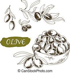 illustrationer, sätta, olive.