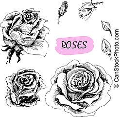 illustrationer, sätta, roses.