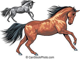 illustrerat, häst