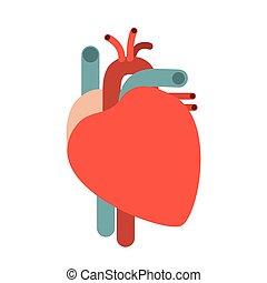 kropp, hjärta, silhuett, färgrik, system, utan, mänsklig, kontur
