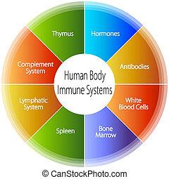 kropp, immun, system, mänsklig, kartlägga
