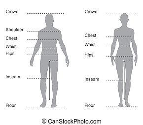 kropp, mått, diagram, kartlägga, kvinnlig, mätning, manlig, beklädnad, storlek