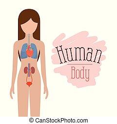 kropp, silhuett, kvinnlig, färgrik, person, system, mänsklig