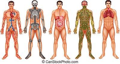 kropp, system