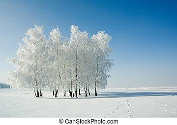 landskap, övervintra trees