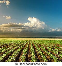 lantbruk, grön, solnedgång gärde