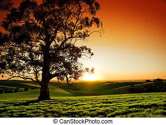 lantlig, solnedgång