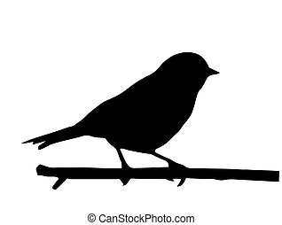 liten, vektor, silhuett, fågel, filial