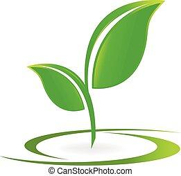 logo, vektor, hälsa, det leafs, natur