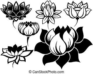 lotusar, sätta
