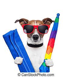 lov, hund, sommar