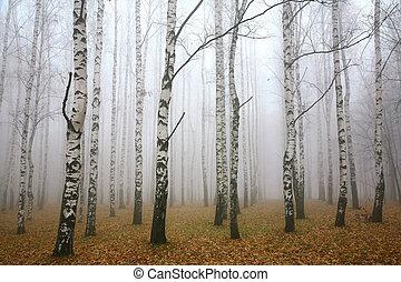 lund, höst, morgon, mist, björk