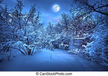 månsken, ved, vinter, natt
