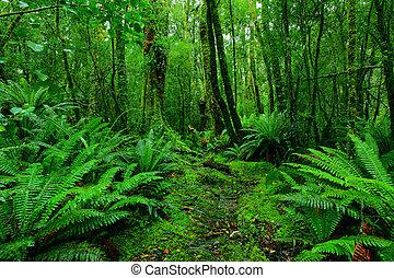 mest rainforest, bana