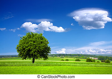 miljö, grön