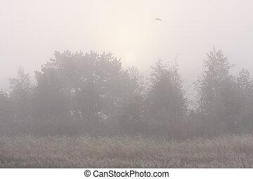 mist, flygning, skog, fågel