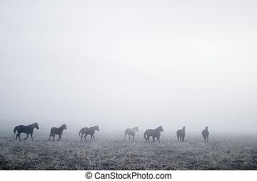 mist, gallping