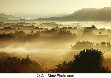 mist, morgon, solsken