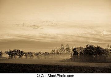 mist, morgon