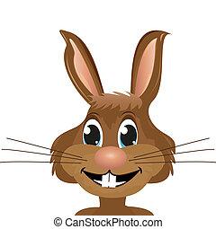 närbild, kanin