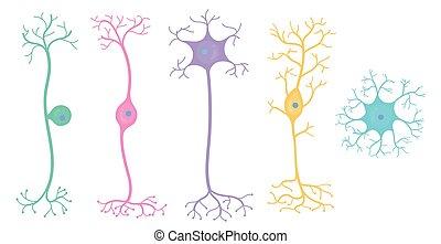 neuron, slagen, grundläggande