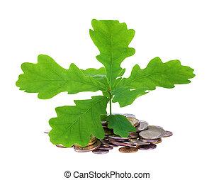 oak-tree, mynter, begrepp, ung