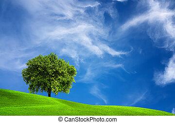 oaktree, natur