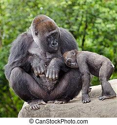 omsorgen, gorilla, ung, kvinnlig