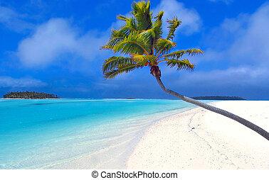 palm, paradis