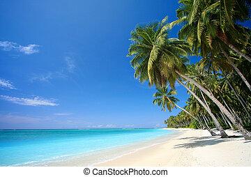 perfekt, tropisk ö, strand, paradis