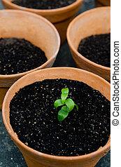 plantande, växt